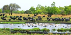 Wild Zambia - Campingtour from West to East